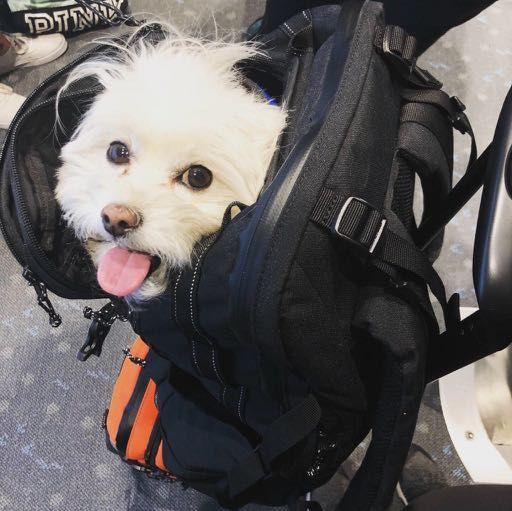 Dog in Ogio Alpha Convoy backpack